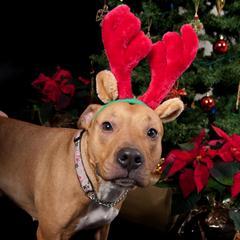 Name:  pb christmas.jpg Views: 2200 Size:  12.1 KB